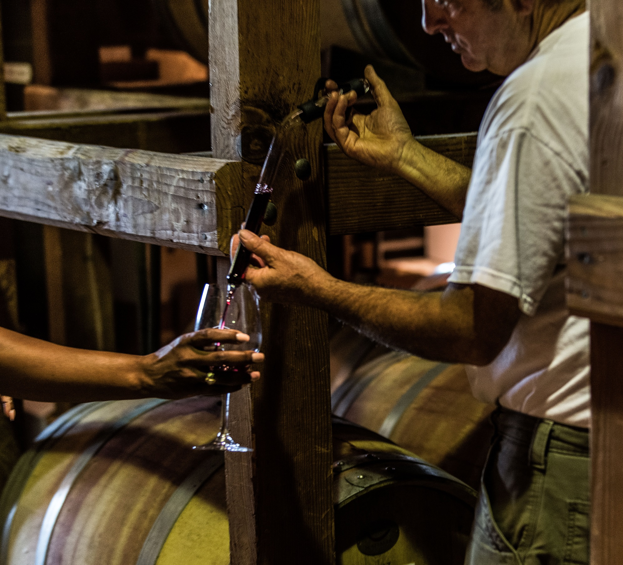 Wine is poured from a barrel using a Thief into a wine glass for tasting