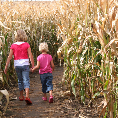 two little girls in corn maze